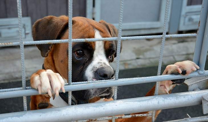 No dogs allowed: San Francisco's pet housing crisis