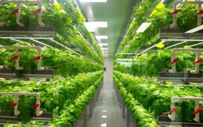 Why the vertical farming market is likely to keep growing